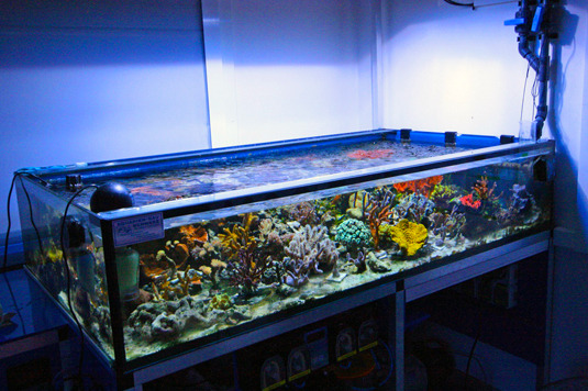 The 330 l experimental bassin in the Aquarium Room