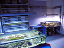 Aquarium Room. In the front, you can see the 330 l experimental bassin. In the back: a rack of 21 x 9 l tanks.