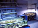 Der Aquarienraum: Vorne im Bild das 330-Liter-Versuchsbecken und im Hintergrund ein Regal mit 21 9-Liter-Behältern.