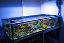 Das 330-Liter-Versuchsbecken im Aquarienraum