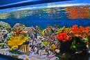 Das 310-Liter-Versuchsbecken im Aquarienraum